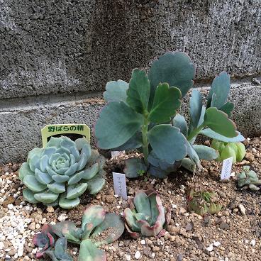 多肉花壇4