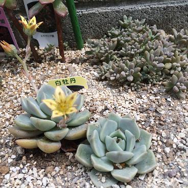 多肉花壇2