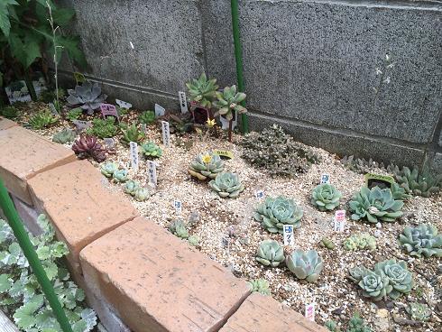 多肉花壇1