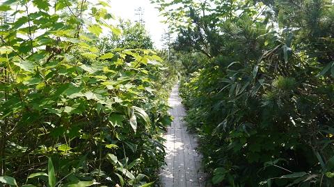 神仙沼自然休養林 2014 夏