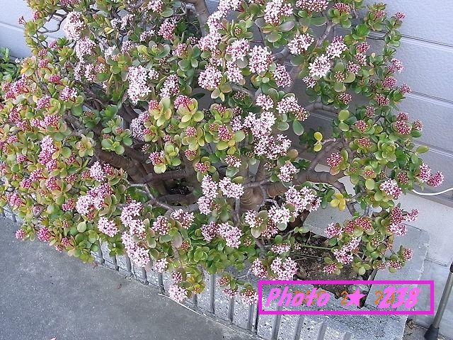 金の生る木の雌花②