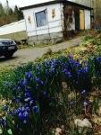 nor青花たち