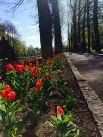 彫刻公園花