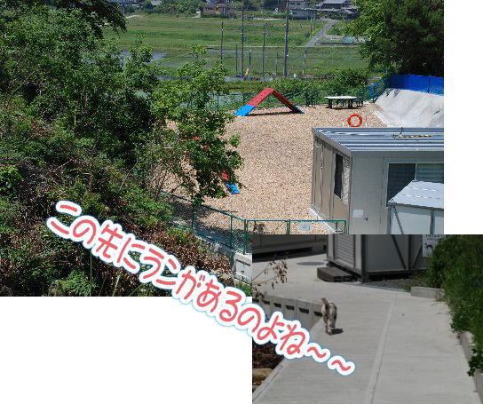2014・06・01能勢ラン5