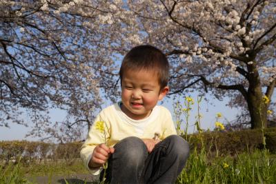 座って花見