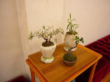 ミニ盆栽-3