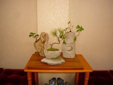 ミニ盆栽-2
