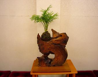 ミニ盆栽-4