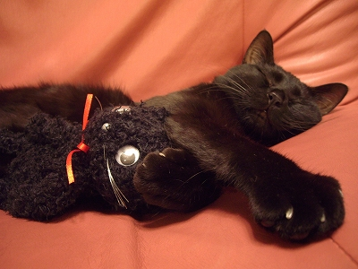 s-黒猫と寝ている黒猫