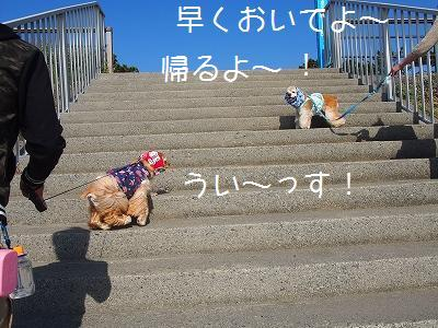 s-うみの階段