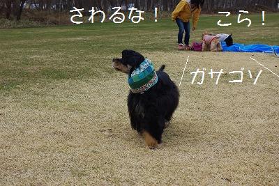 s-銀ちん!