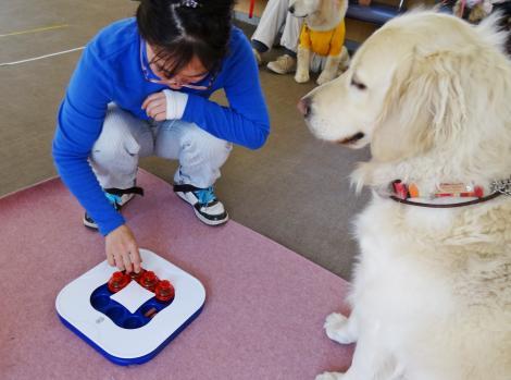 犬族・猫族・大家族:犬の学校 IQって生きていく力のことなんだよ ...