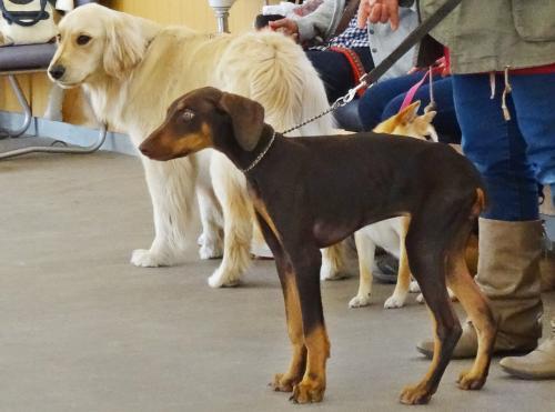 犬の学校 新入生♪