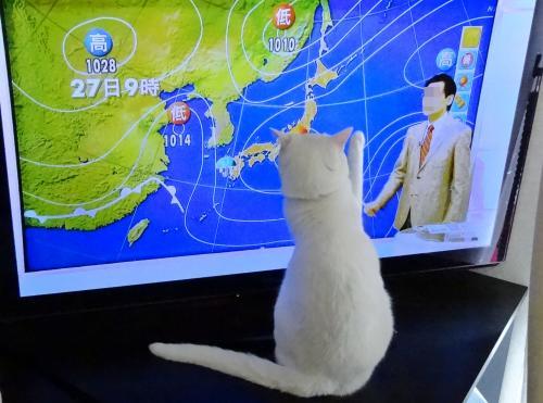 天気予報は任せてヨ!