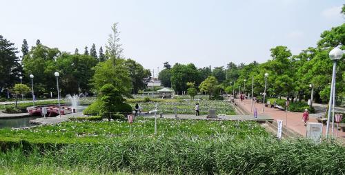 油ヶ渕遊園地 花菖蒲園