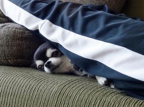 安眠できるの?