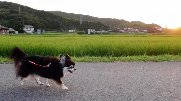 夕方お散歩