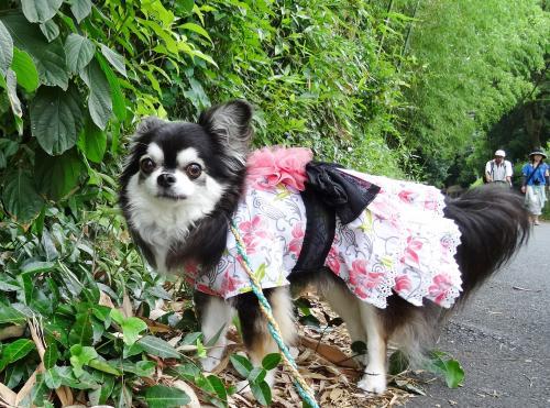 京都嵐山散歩