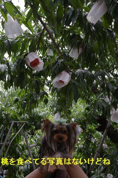 桃の木とアガサ