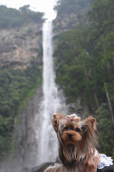 那智の滝とアガサ
