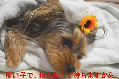 DSC_0299_2014082900080594a.jpg