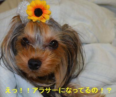 DSC_0303.jpg