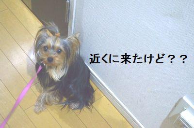 DSC_0500_201409140149206ec.jpg