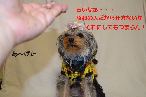 DSC_1161.jpg