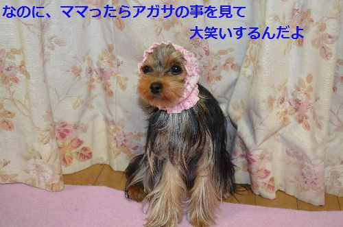 DSC_1423_20140325000809a3c.jpg