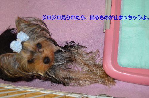 DSC_1555_201403300324363a3.jpg