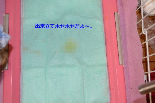 DSC_1563.jpg