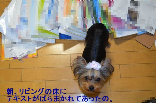 DSC_1619.jpg