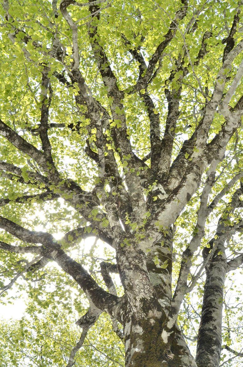 野鳥の森 345-2s