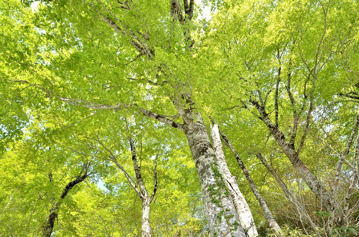 野鳥の森 144s