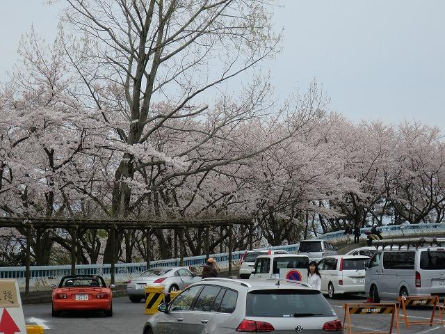 奥琵琶湖パークウェイ (3)