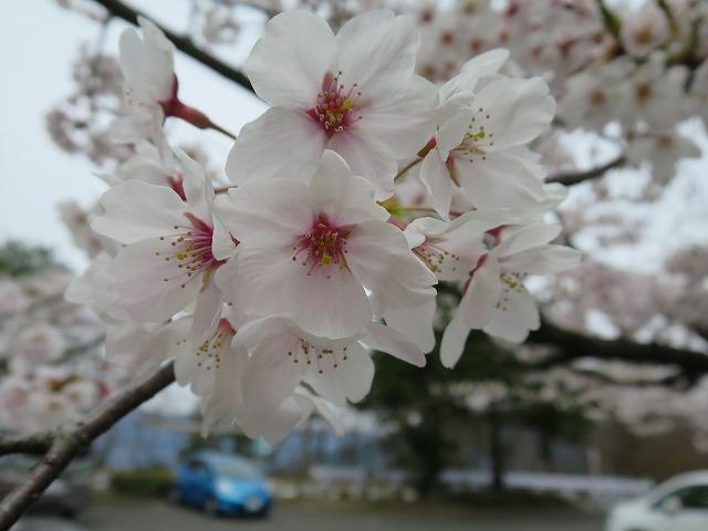 20140413 奥琵琶湖パークウェイ (60)