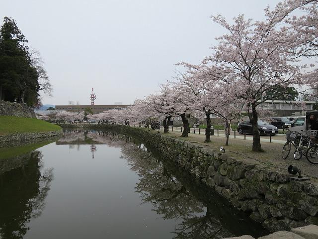 彦根城 (4)