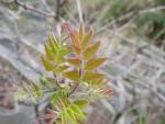 花山周辺 芽吹き (15)