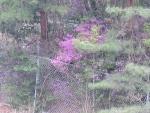 花山周辺 芽吹き (12)