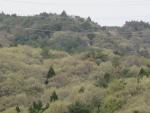 花山周辺 芽吹き (2)