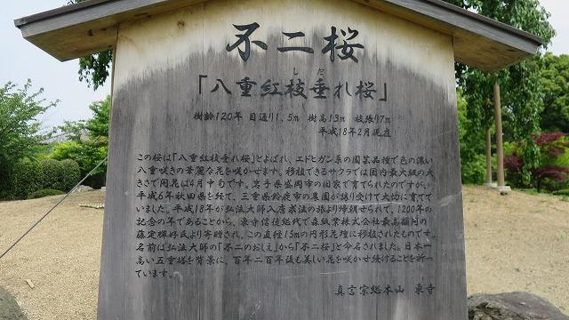 東寺 (6)