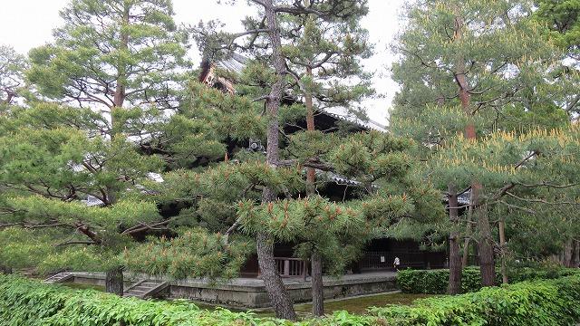 大徳寺 (12)
