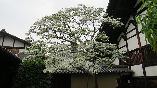 大徳寺 (8)
