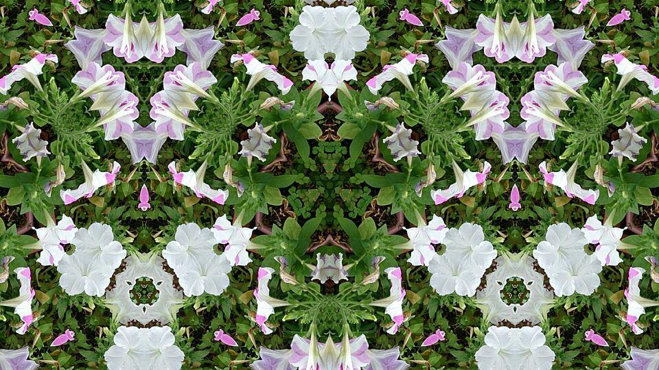 花ベランダの