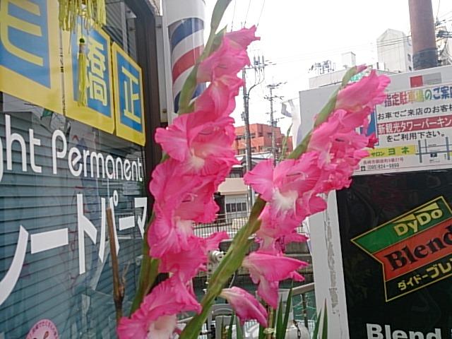 床屋さんの花