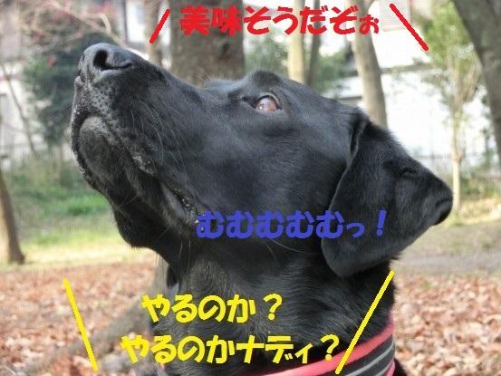 2014029-04.jpg