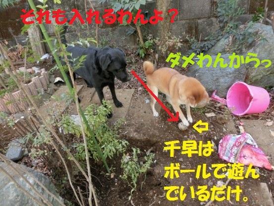 2014032-05.jpg