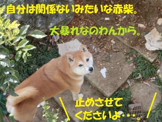 2014032-09.jpg