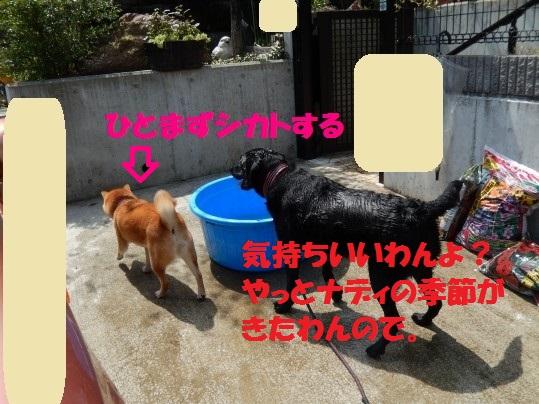 水浴び1-02