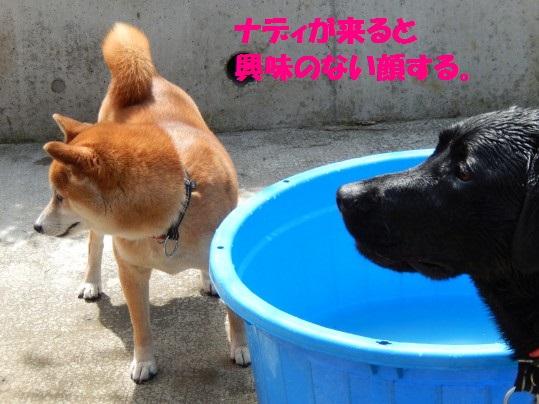 水浴び1-07